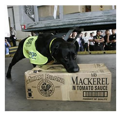 DVD-sniffing dog inspecting a box.