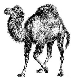 The Perl Camel