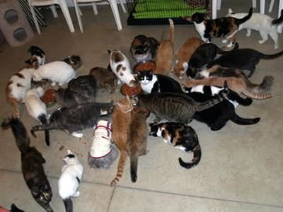 A gathering of several cats