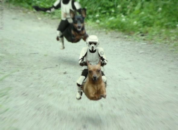 """Star Wars\"" Stromtroopers riding dogs like speeder bikes"